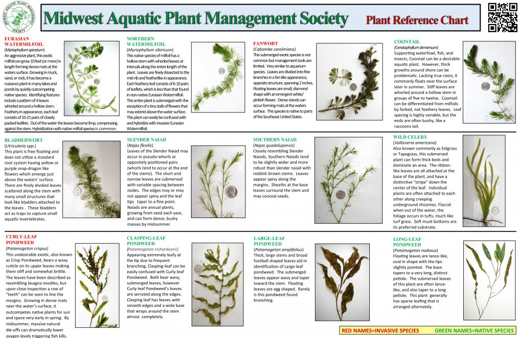 Plant Reference Chart. Click to view as PDF.